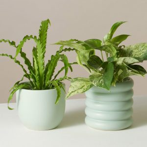 Photo of plants by The Sill