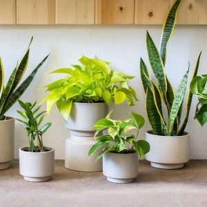 Photo of small plants by The Sill